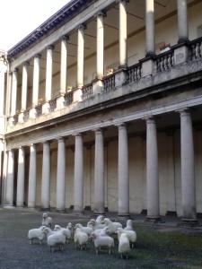 Cortile interno Archivio di Stato con le simboliche pecore della Woolmark Company