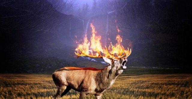 cervo-fiamme-692x360